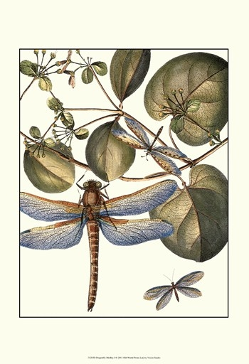 Dragonfly Medley I Poster Print by Vision studio (13 x 19)